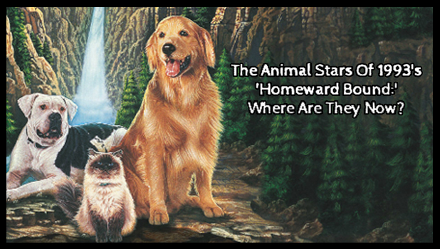 homeward bound-thumbnail 4