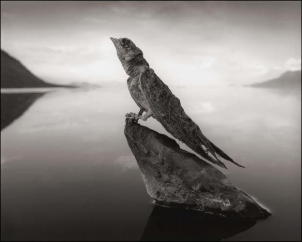 calcified-swallow-0-95-640x512_